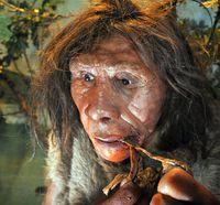 musee-de-la-prehistoire